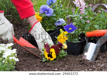 Planting flowers into flower beds in the garden - stock photo