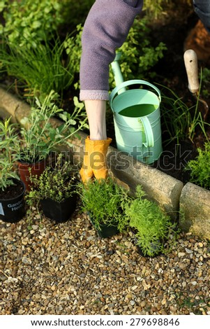 Planting herbs in a garden