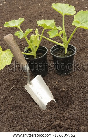 Planting vegetable seeds in prepared soil - stock photo