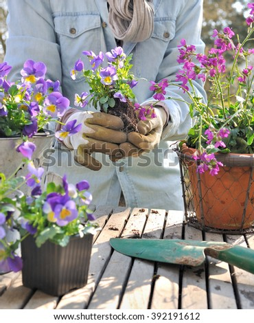 planting violas in decorative pots on a garden table