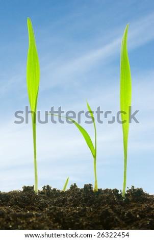 plants against a sky - stock photo