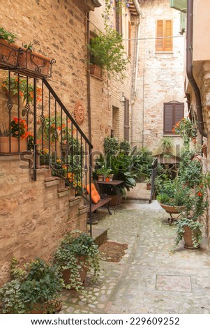 Plants and flowers in the historic Italian city. (Spello, Umbria, Italy.) Vertically. - stock photo