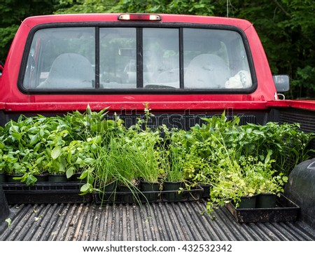 Plants and vegetables for sale in a pickup truck at a farmer's market