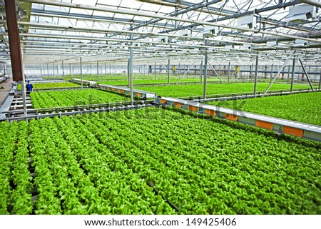 Plants and worker in the light greenhouse - stock photo