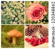 Plants four seasons, spring, summer, autumn and winter - stock photo