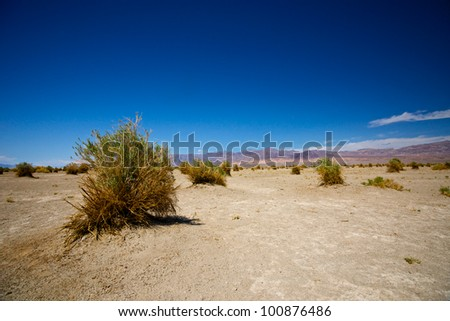 Plants grow sparsely in the Devil's Cornfield section of Death Valley National Park. - stock photo