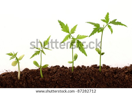 Plants growing from soil