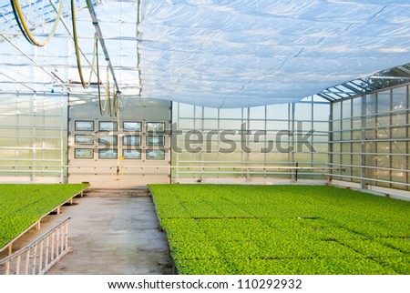 plants growing in greem house - stock photo
