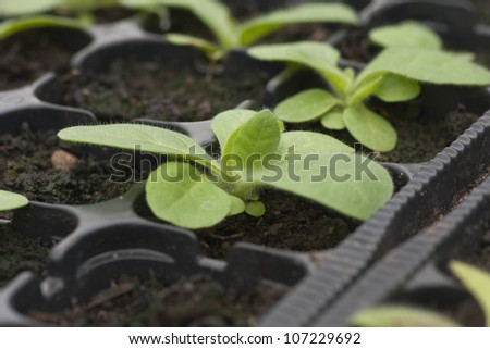 Plants growing in greenhouses. Shallow depth of field. - stock photo