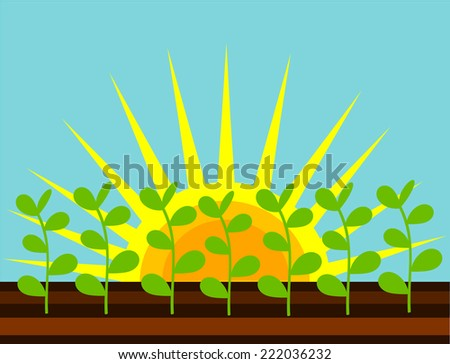Plants growing on the field in sunshine - stock photo