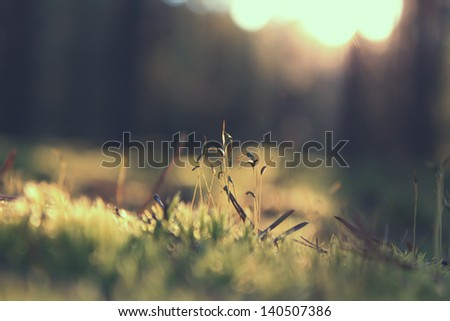 plants in forest in sunrise - stock photo