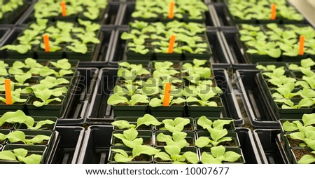 Plants in greenhouse - stock photo