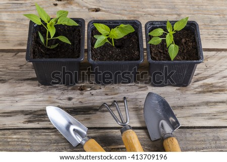 Plants in pots with gardening tools - stock photo