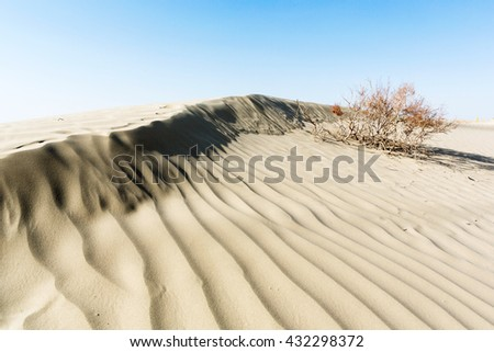 plants in sandy desert with blue sky