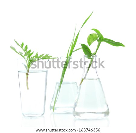 Plants in test tubes, isolated on white - stock photo