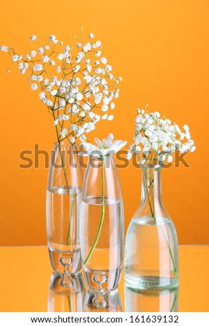 Plants in various glass containers on orange background - stock photo