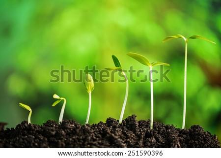 Plants, life, nature, time, comparison - stock photo