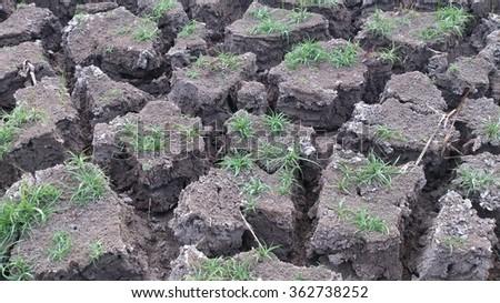 Plants need dry soil - stock photo