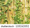 Plants on a bamboo wall. - stock photo