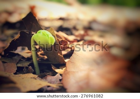 Plants on soil - stock photo