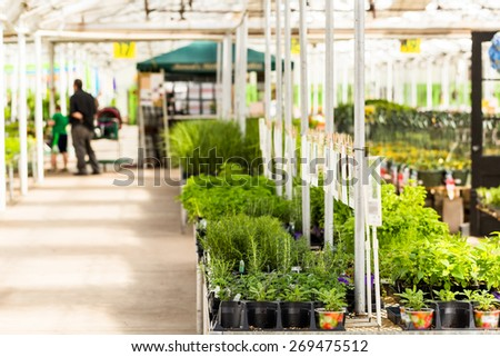 Plants on Spring sale in local garden ccenter.