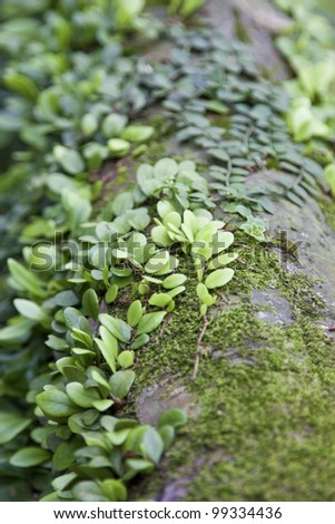 plants on wood - stock photo
