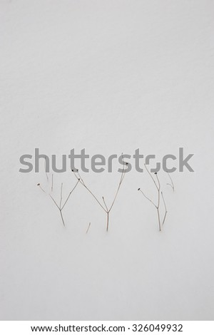 Plants sticking out from under the fallen first snow - stock photo