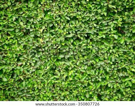 Plants surface - stock photo