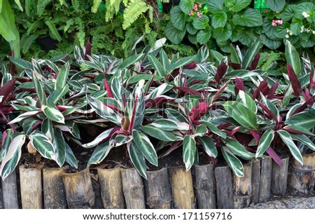 Beautiful Plant Plants With Beautiful Leaves