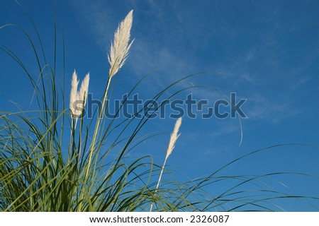 Plants with blue sky in background - stock photo