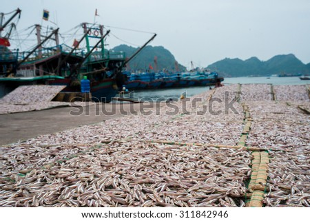Planty of freshly caught  little anchovy fish drying on open air in a Vietnamease port