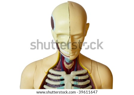 Plastic human toy showing body structure macro shot (clipping path isolation) - stock photo