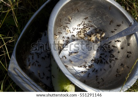 plate with ants