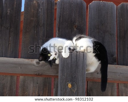 Playful Black and White Cat on Fence - stock photo