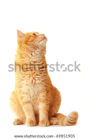 Playful cat waiting - isolated on white - stock photo