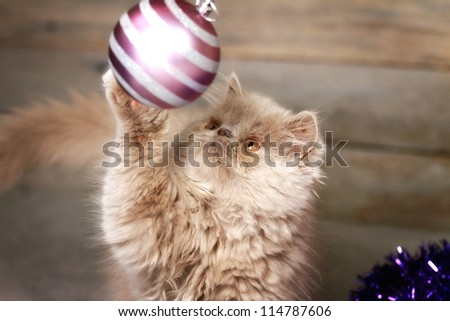 playful cat with hanging ball - stock photo