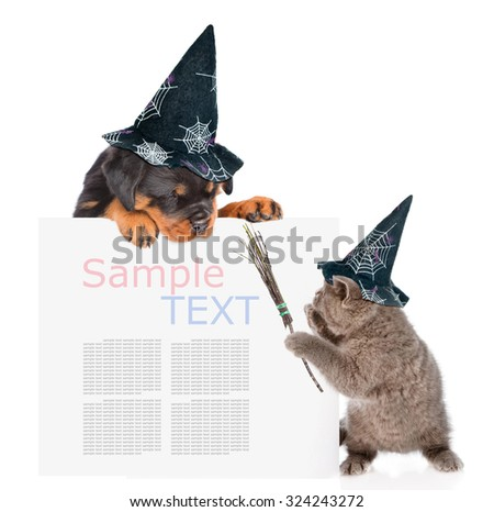 Playful cat with witches broom stick and rottweiler puppy with hats for halloween peeking from behind empty board. isolated on white background - stock photo
