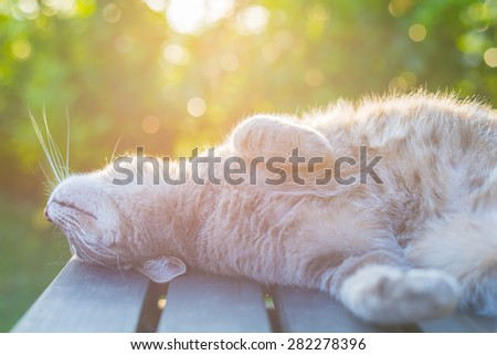 Playful domestic cat lying on wooden bench with bent paws. Shot in backlight at sunset. Very shallow depth of field, focused on snout. - stock photo