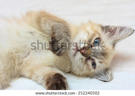 Playful eight weeks old kitten laying on a bed - stock photo