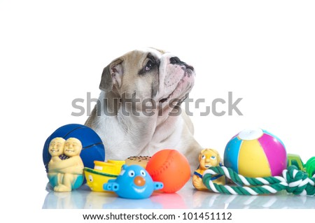 Playful english bulldog puppy with dog toys isolated - stock photo