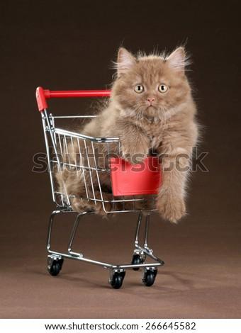 Playful fluffy kitten sitting in the shopping cart - stock photo