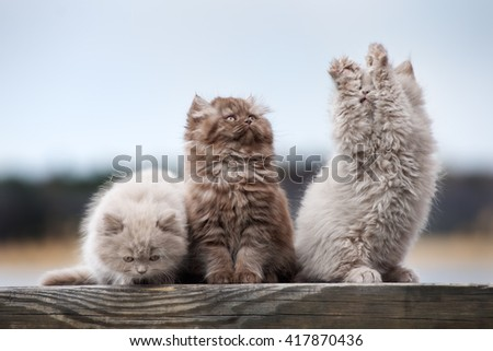 playful fluffy kittens outdoors - stock photo