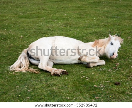 Playful horse rolling on the grass with what looks like a smile - stock photo