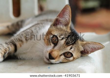Playful Kitten Closeup - stock photo