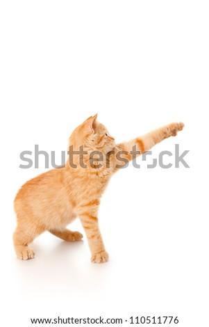Playful kitten isolated on white - stock photo