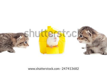 playful kittens and pet rat in a yellow house on a white background isolated - stock photo