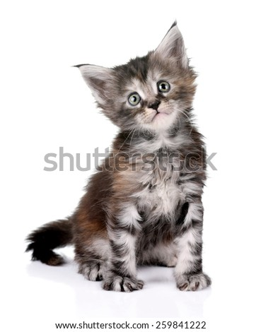 Playful little kitten on a white background