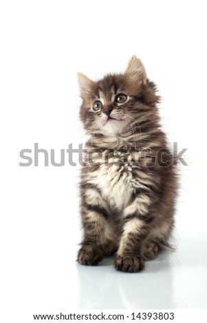 Playful little kitty isolated over white