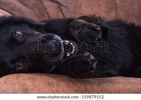 playful pet - stock photo