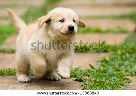 playful puppy running - stock photo